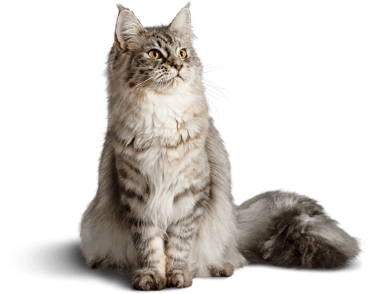 What Is A Cat Food Diet