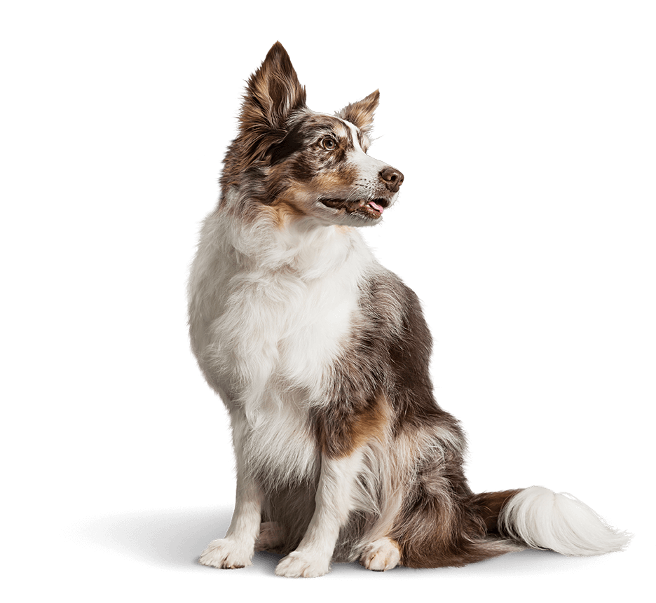 For dogs diagnosed with acute or chronic kidney disease