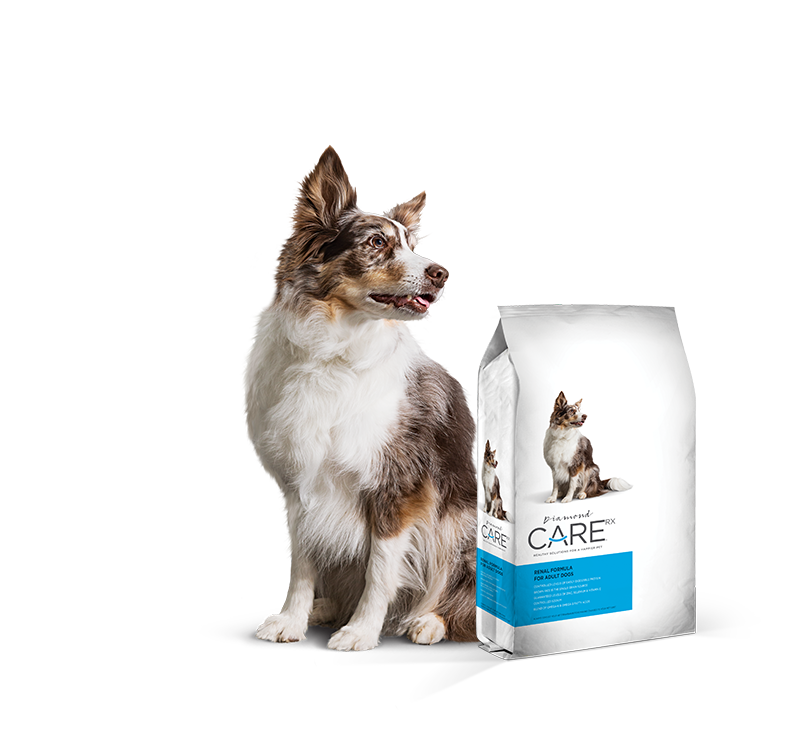Prescription Renal Dog Food
