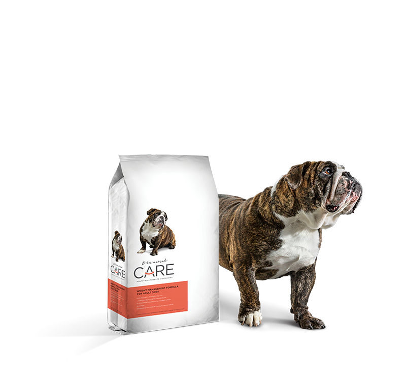 Grain-Free Dog Food for Weight Management