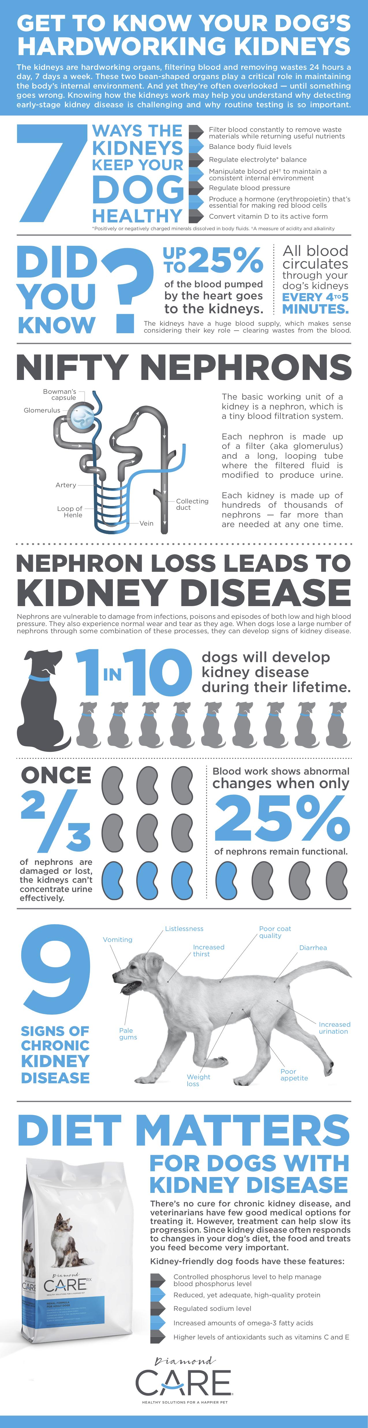 dog kidney